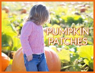 Pumpkin Patches Sticky 2019